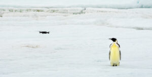Drones used to monitor penguins in Antarctica