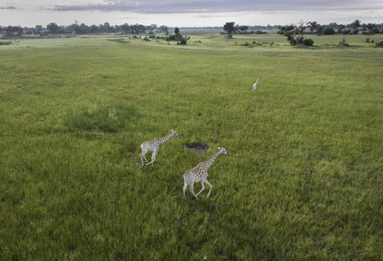 Drones and wildlife conservation efforts